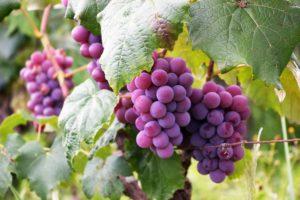La Vista Vineyards, from Wine Write
