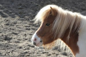 The Pony Joke